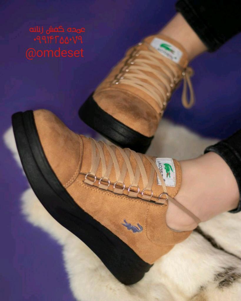 کفش بندی لاگوست جدید